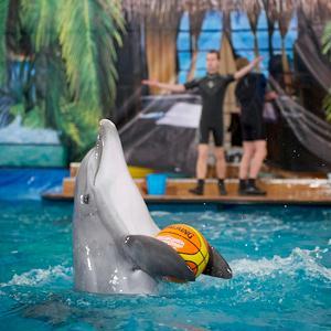 Дельфинарии, океанариумы Кореновска