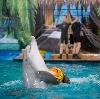 Дельфинарии, океанариумы в Кореновске