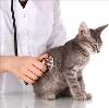 Ветеринарные клиники в Кореновске